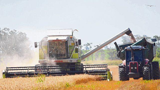 Cosecha. La producción agrícola exhibió altos rindes
