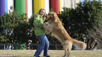 Día Mundial del Perro: una fecha para mimar al amigo más fiel