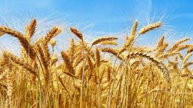 El valor del trigo