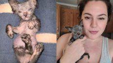 Gracie, la gatita enferma que en realidad no es gatita.