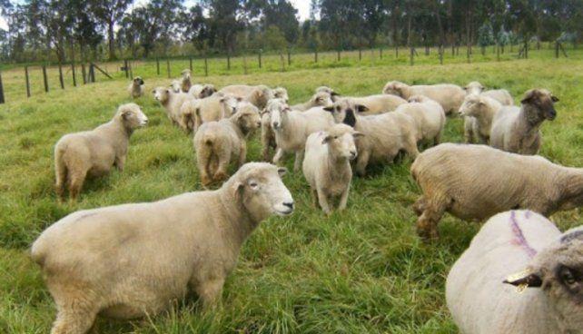 Diputados debatieron sobre la modificación de la ley ovina