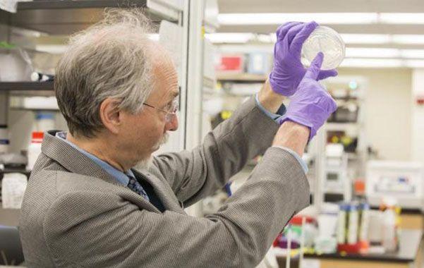 La prueba. El científico Jef Boeke muestra la primera levadura con un cromosoma sintético en su laboratorio.