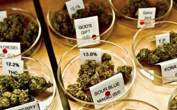 Psicoactivos. El canabinoide sintético es más potente que la marihuana.