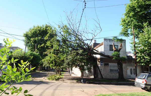 Un árbol caído en Agrelo y Berón. (Foto: S. Salinas)